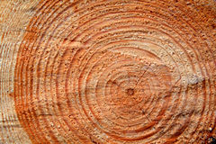 Pine cut tree texture Royalty Free Stock Photos