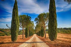 Pine and cypress trees rows and country road, Tuscany, Italy royalty free stock photography