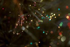 Pine with diffused lights of different colors stock photography