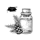 Pine essential oil bottle and fir hand drawn vector illustration. Isolated plant drawing for Aromatherapy Royalty Free Stock Photography