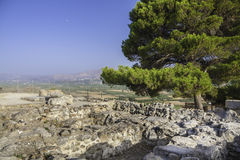 Pine on Festos ruins Royalty Free Stock Images