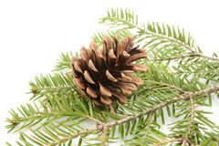 Pine and fir Stock Photo
