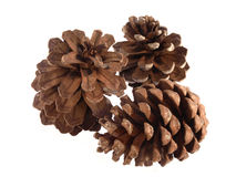 Pine or fir cones on a white background Royalty Free Stock Image