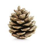 Pine fir-tree cone isolated on white Royalty Free Stock Photography