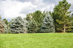 Pine and Fir Trees on Green Grass Hill Stock Photo