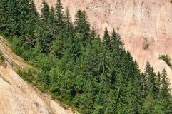 Pine, fir wood Stock Photo