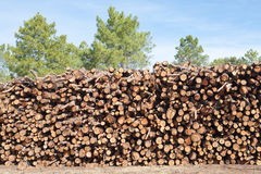 Pine firewood stacked Stock Photography
