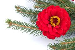 Pine and flowers Stock Photography