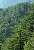 Pine forest. Aerial view of a pine forest Royalty Free Stock Photos