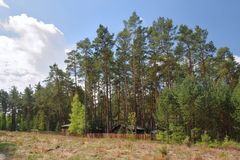 Pine forest above autocamp Andrea in Machuv kraj tourist area in spring before start of main season Stock Photography