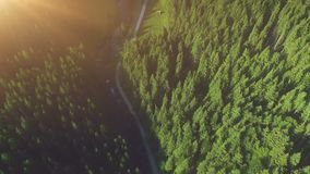 Pine forest from above, fall season, forest road stock footage