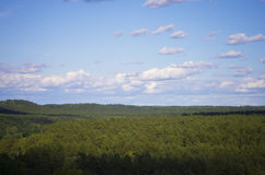 Pine forest from above. Pine forest in summer, Lithuania royalty free stock photos