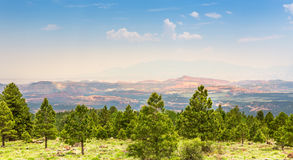 Pine forest against rocky mountains. Royalty Free Stock Image