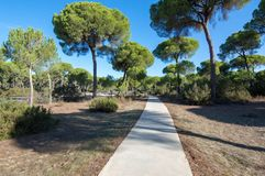 Pine forest of Algaida. It´s located in the Doñana Natural Area within the municipality of Sanlucar de Barrameda, España stock photography