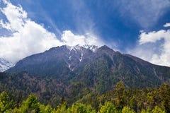 Pine forest in Annapurna trek Stock Photos