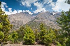 Pine forest in Annapurna trek Stock Photo