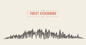 Pine forest background vector drawn sketch Stock Image