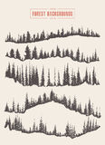 Pine forest background vector drawn sketch Stock Photos
