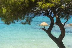 Pine forest on the beach in summer Stock Photo