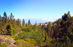 Pine forest and beautiful white clouds on the horizon in Vilaflor mountain village, Tenerife,Canary Islands,Spain. Stock Photos
