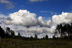 Pine forest and blue sky with clouds Stock Photos