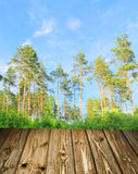 Pine forest with boards concept Stock Photography
