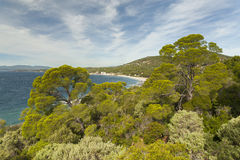Pine forest on Côte d'Azur.  Royalty Free Stock Photography
