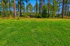 Pine forest Campsite Pitch Stock Photography