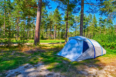 Pine forest Campsite Pitch Stock Images