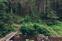 Pine forest in the Carpathians Stock Photo