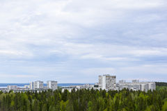 Pine forest cityscape Stock Photos