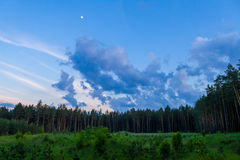 Pine forest and cloudy sky at the end of day Stock Images