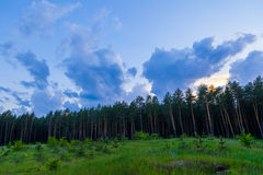 Pine forest and cloudy sky at the end of day Stock Photography