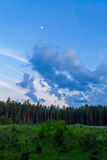 Pine forest and cloudy sky at the end of day Stock Photo
