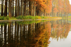 Pine Forest and Colorful Reflected Image Stock Image