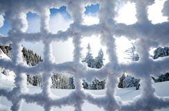 Pine forest covered in snow seen trough a frozen fence Stock Photo
