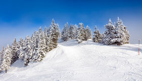 Pine forest covered in snow Stock Photography