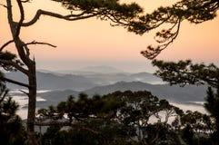 Pine forest of Da Lat city Stock Photos