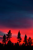 Pine forest on deep red sky Stock Images