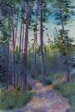 Pine forest at dusk. Summer pine forest at dusk royalty free illustration