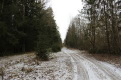 Pine forest in early spring Just fell out not sick snow spring forest road Old Smolensky tract At the side of the road a Pine and royalty free stock photo