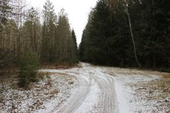 Pine forest in early spring Just fell out not sick snow spring forest road Fork stock images