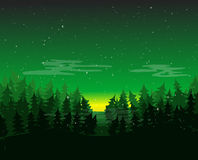 Pine Forest Environment at Night. Stock Images