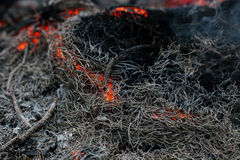 In a pine forest fire burning branches and trees Royalty Free Stock Photography