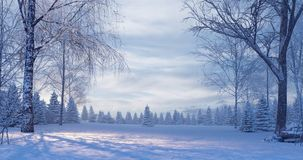 Pine forest in the foggy winter night stock photo