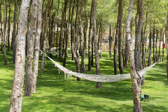 Pine forest with hammocks.Relax area. Hammocks  in a green garden with pine trees Royalty Free Stock Images