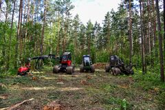 Pine forest harvesting machine and Crane forwarder at during clearing of a plantation. Wheeled harvester sawing trees and clearing