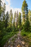 Pine forest and hiking trail in the mountains. Landscape with pine forest and hiking trail in the mountains Stock Photo