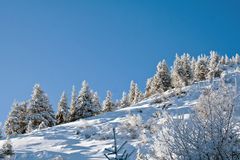 Pine forest on the hill Royalty Free Stock Images