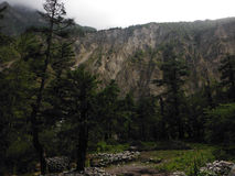 Pine Forest before a Himalayan Cliff Stock Images